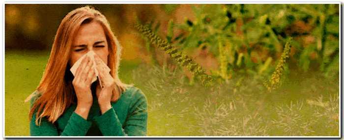 «Сноуфлейк»: уникальный город, гдеживут люди с«аллергией насовременную жизнь»