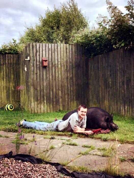 Британец бросил невесту у алтаря, променяв ее на 200-килограммовую свинью