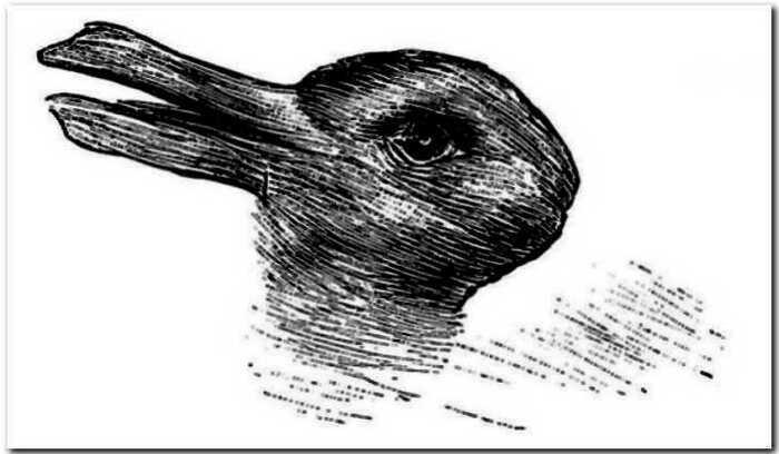 Ворона или кот? Новая иллюзия рвет мозг простым обывателям интернета