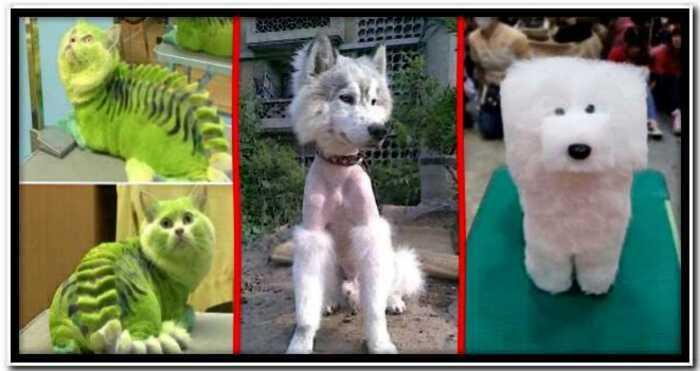 15 самых безумных стрижек собак и котов, за которые должно быть стыдно