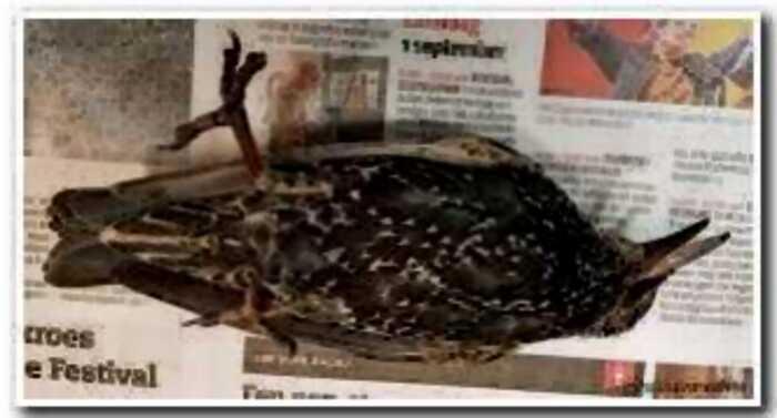 В Голландии протестировали связь 5G — сотни птиц погибли в первый же день