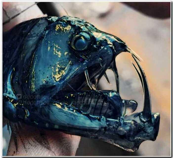 «Из глубин морских»: мурманский моряк Роман пугает своим уловом соцсети