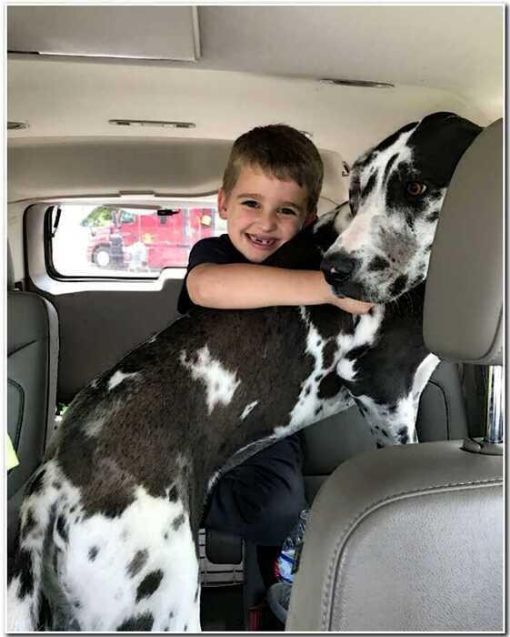 30 веселых фотографий о том, что Дог — лучшая собака на свете