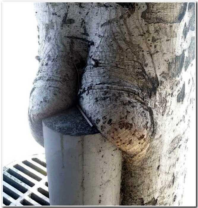 18+ строптивых деревьев, которые зачем-то отрастили себе пятую точку