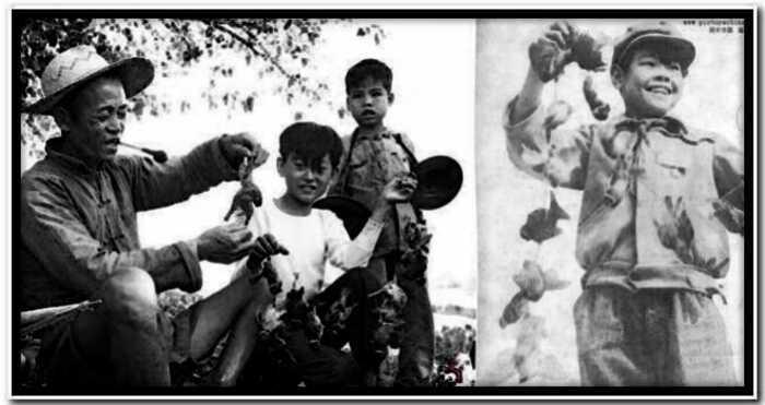 """""""Птичий геноцид"""": история о том, как природа китайцам за воробьев отомстила"""