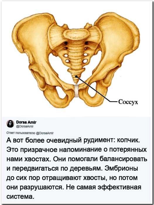 «Эволюция человека»: антрополог рассказала какие части человеческого тела нам больше не нужны