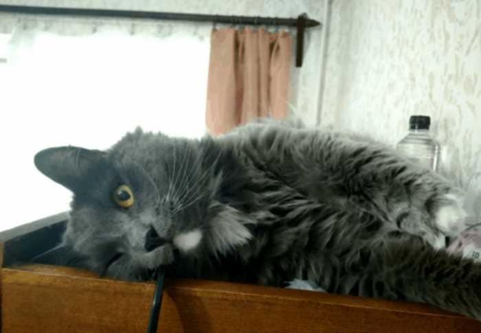 """""""5 кило чистой ненависти"""": парень из Костромы начал сдавать кота в аренду"""