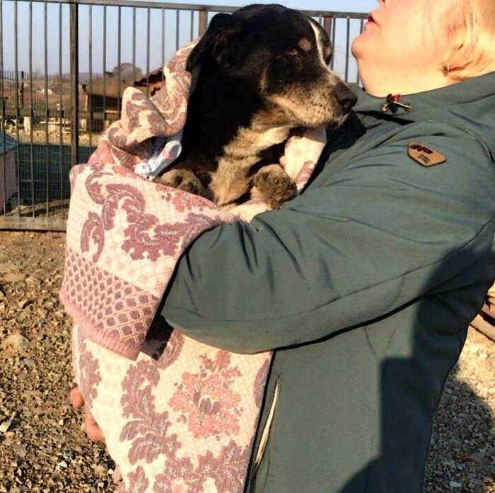 В Приморье хозяева заживо похоронили пса. Но он выбрался и пришел к ним обратно