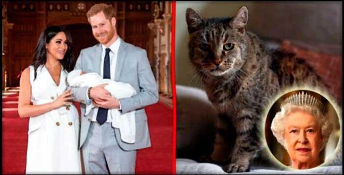 """«Королева негодует: """"СМИ выяснили, что Меган Маркл назвала своего сына в честь… кота!"""""""