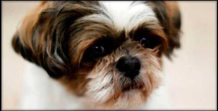 Здоровую собаку похоронили с хозяином в США. Как такое допустили?