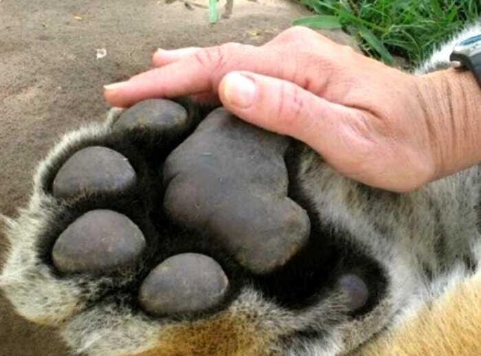 15+ фото животных, которые на своём примере показывают, что размеры познаются в сравнении
