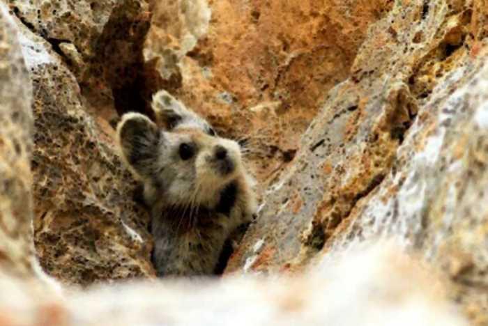 15 редких видов животных и растений, которые все еще существуют на планете