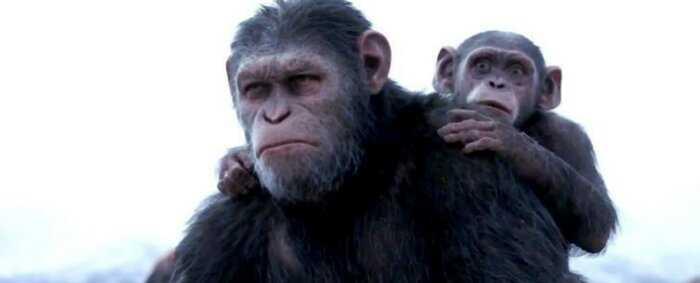 В Китае создали гибрида человека и обезьяны для трансплантации органов