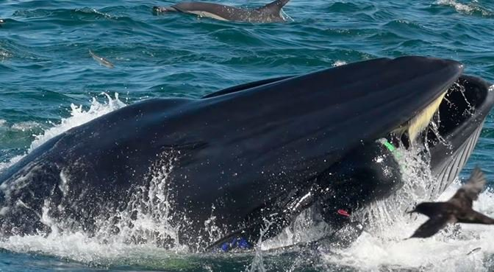«Стало темно и страшно»: дайвера из Африки проглотил и выплюнул кит