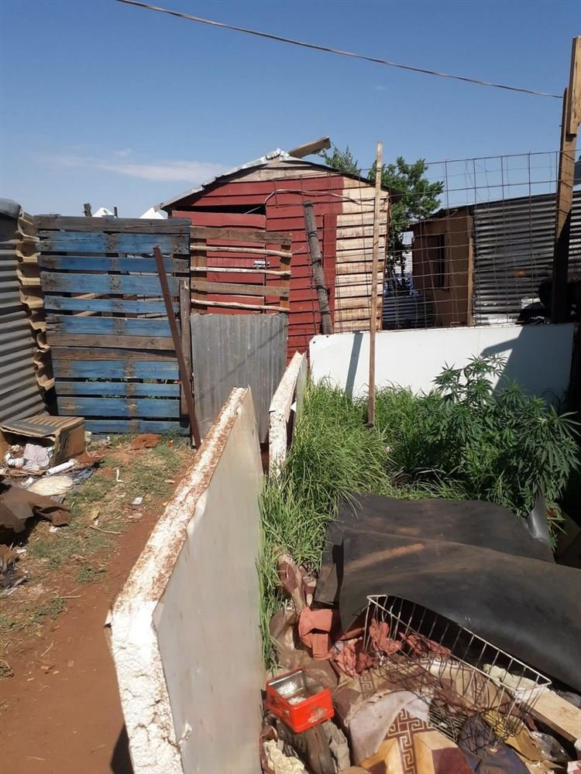 История сквотов в Южной Африке, где обитают нищие белые. Кто они и зачем там живут?