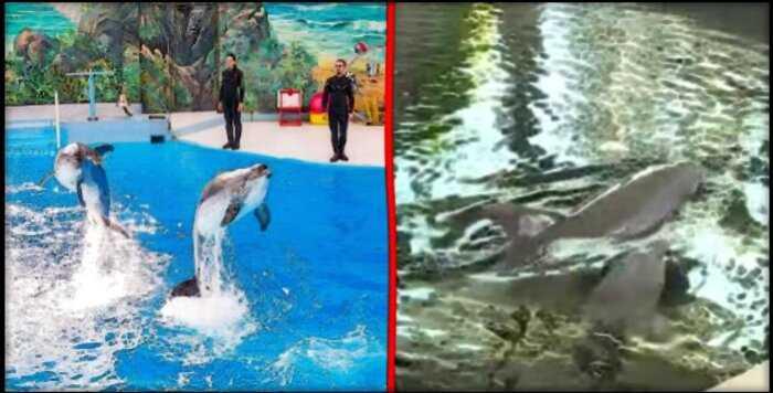 В Болгарии дельфиненок скончался от переутомления прямо во время шоу