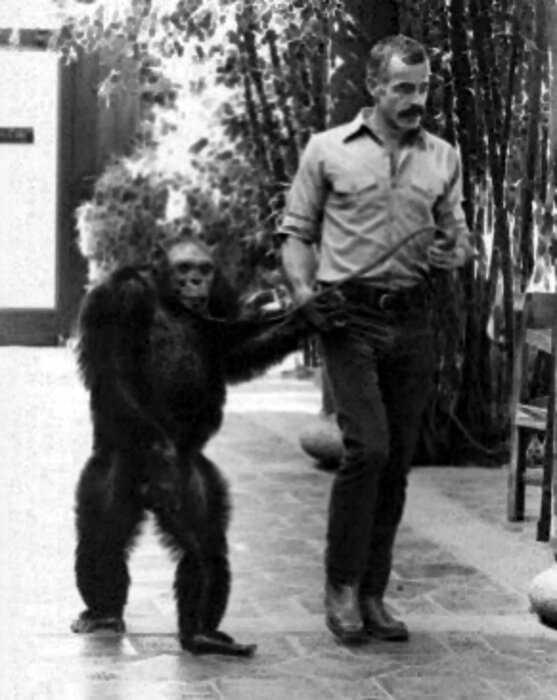 Что стало с гибридом человека и обезьяны, которого создали ученые из США?