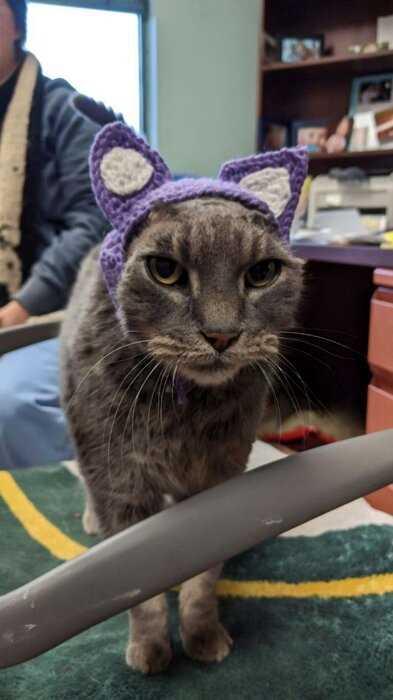 Никто не хотел приютить изуродованную кошку со вязаными ушами, но она нашла свой дом