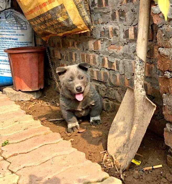 «Гибрид кошки и собаки»: в сети умилились необычному щенку