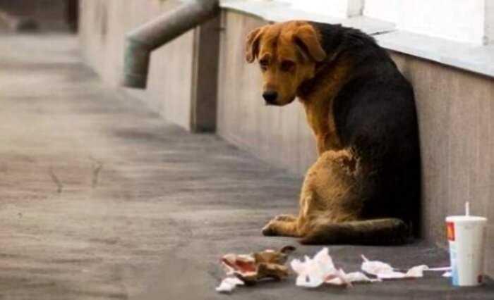 В Италии ввели штраф 10,000 евро и 12 месяцев тюрьмы за выброшенное животное