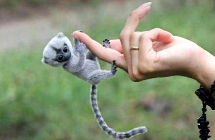 Фото крохотных животных, которые очаровательны до невозможности