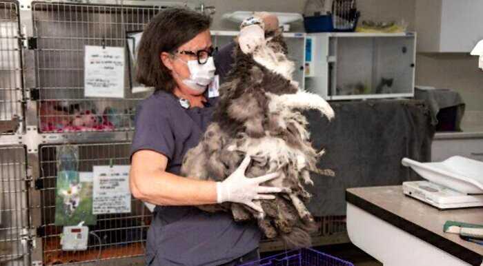 Только сбрив 1кг грязной шерсти, волонтеры поняли что за животное они нашли