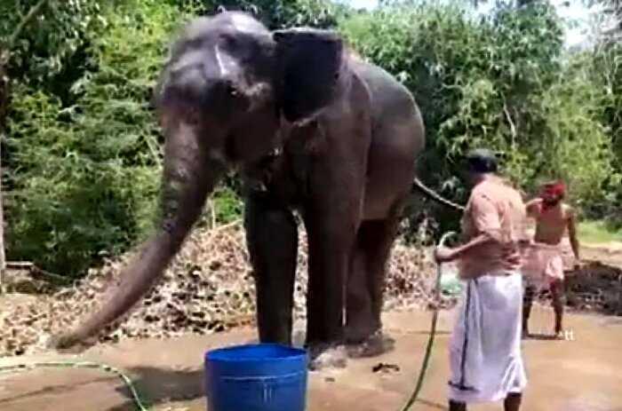 Мужчина завещал многомиллионное состояние спасшим ему жизнь слонам