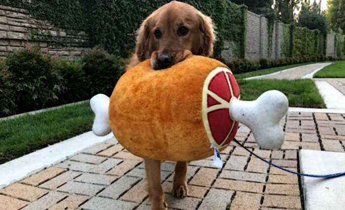 Куда бы ни шел этот пес, он берет с собой одну из своих смешных мягких игрушек