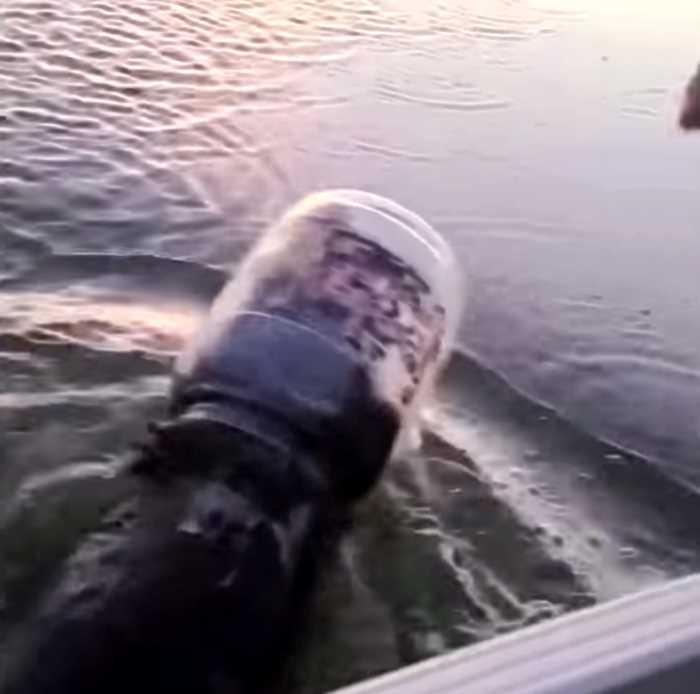 Медведь застрял головой в бочке и едва не утонул, переплывая озеро, но его вовремя спасли
