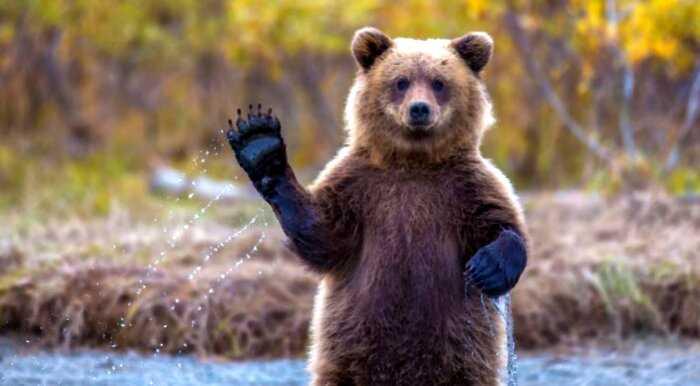 Тысячи людей вступились за приговоренного к казни медведя