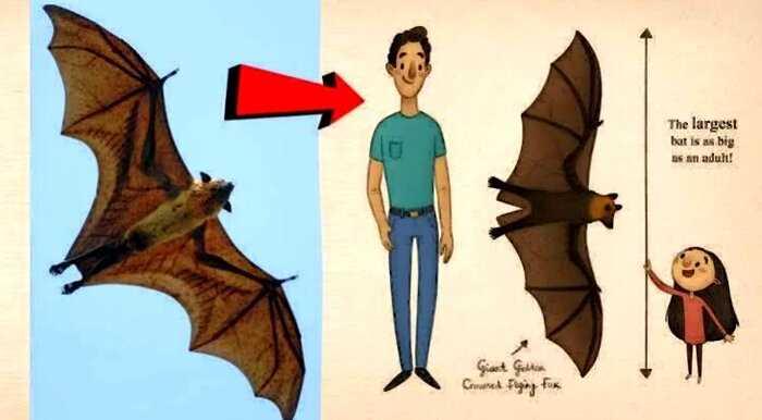 В Twitter появилось фото летучей мыши размером с человека, и, что ещё хуже, она действительно существует