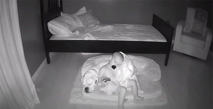Чтобы спать на полу в обнимку с лучшим другом, малыш посреди ночи выбирается из своей кровати