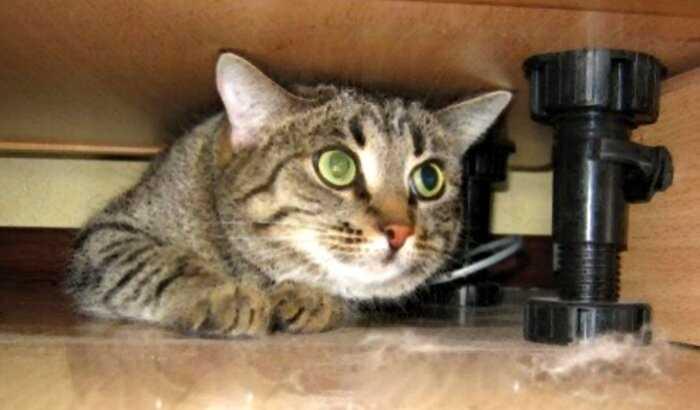 Кот вернулся домой с угрожающим письмом от соседей