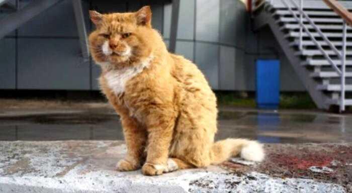 Познакомьтесь с Кешей, единственным котом на острове, где животные запрещены
