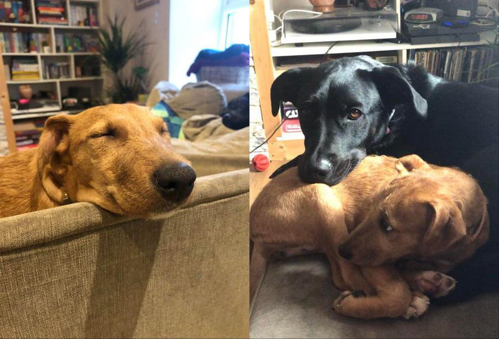Жена сняла, как спасённый щенок смотрит на её мужа, и всем стало ясно — это самая настоящая любовь