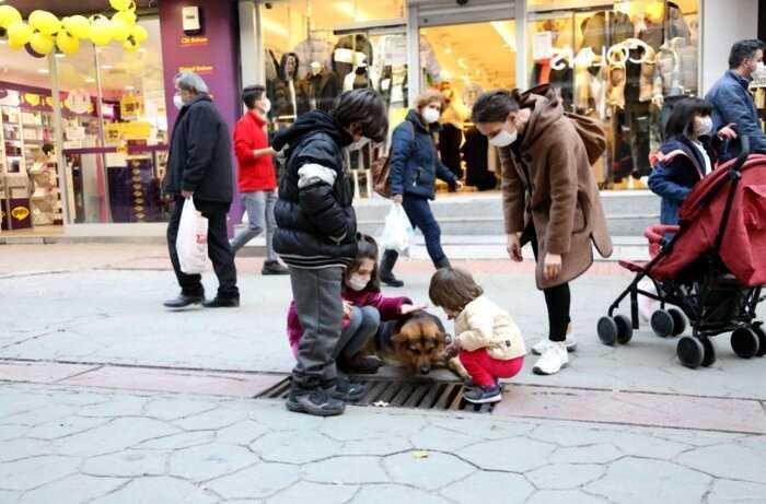 Этот песик из Турции каждый день часами смотрит в решетку стока и кажется, он видит больше чем все остальные