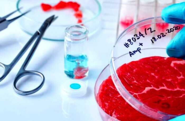 К 2030 году мясо из пробирки станет дешевле обычной говядины