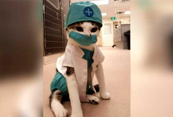 Выпишите им срочно премию: 15 котов на рабочем месте, которые трудятся не покладая лапок