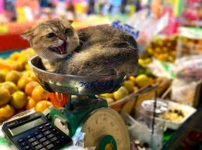 15 котиков, которые пришли в магазин, но не за покупками, а чтобы забрать ваше сердечко