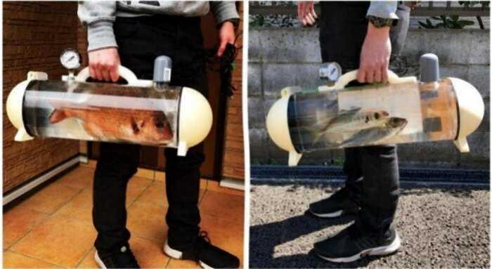 Японская компания разработала переносной аквариум