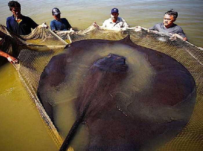 10 самых больших существ, когда-либо пойманных рыбаками