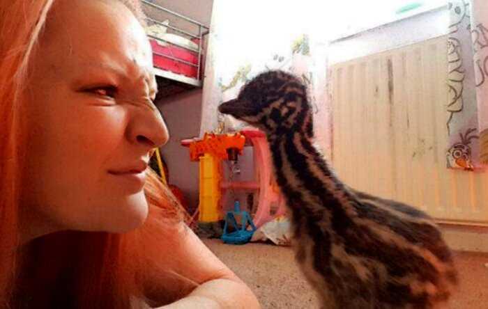 Из купленного в Сети за 25£ яйца женщина растит страуса